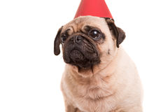 Pug Royalty Free Stock Images