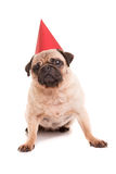 Pug. Puppy wearing a festive hat, isolated over a white background stock photos