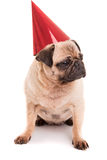 Pug Royalty Free Stock Photos