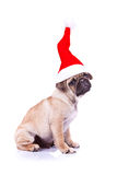 Pug puppy wearing a santa hat Royalty Free Stock Photo