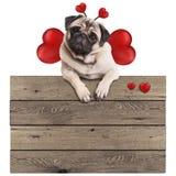 Pug puppyhond het hangen met poten op leeg houten uitstekend promotieteken met rode die harten, op witte achtergrond wordt geïsol Royalty-vrije Stock Foto