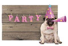 Pug puppyhond met roze partijhoed en hoorn en houten teken met tekstpartij Stock Fotografie