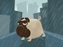 Pug on a rainy day. Funny illustration of a pug on a rainy day Royalty Free Stock Photos