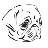 Pug's head Royalty Free Stock Images