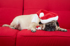 Pug Sleeping on Couch Stock Photos