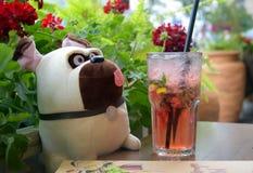 pug soft toy dog pug in restaurant drinks cocktail, summer cafe and pug drink lemonade, dog stock images