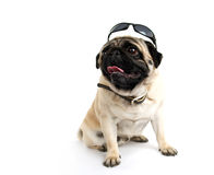 Pug in sunglasses. On white background Stock Photography