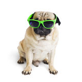 Pug with sunglasses. Royalty Free Stock Image