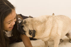 Pug Trying to Give Girl a Kiss Stock Photos