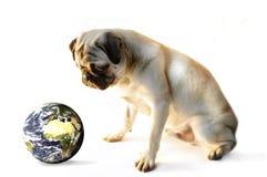 Pug und die Welt Stockfotografie