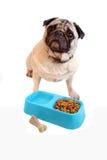 Pug und dogfood Stockbild