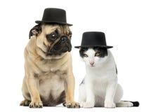 Pug und Katze, die einen Zylinder tragen Stockbild