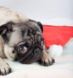 Pug und Sankt-Hut stockfotografie