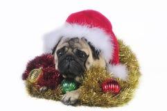 Pug van de kerstman Royalty-vrije Stock Afbeeldingen