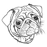 Pug vector linear illustration on a white Stock Photo