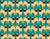 Pug Wallpaper. Cute Pug Wallpaper Background Illustration Royalty Free Stock Photo