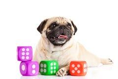 Pugdog собаки изолированное на белой предпосылке dices любимчик игрушки Стоковые Изображения RF