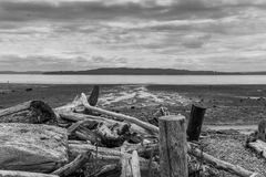 Puget Sound-Meerblick Stockfotos