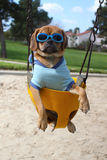 Puggle Royalty Free Stock Photography