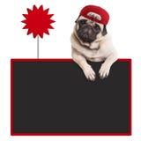 Pughündchen, welches die rote Kappe, hängend mit den Tatzen auf leerer Tafel mit Verkaufszeichen trägt stockbilder