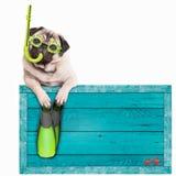 Pughund mit hölzernem Strandzeichen der blauen Weinlese, wenn den Schutzbrillen, Schnorchel und Flipper für Sommer, auf weißem Hi Stockfotografie