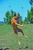 Pugili a saltare del gioco Fotografie Stock Libere da Diritti