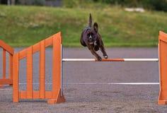 Pugilista na ação da agilidade Fotografia de Stock
