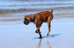Pugilista na praia fotografia de stock royalty free