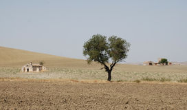 Puglia Landscape with Tree Royalty Free Stock Image