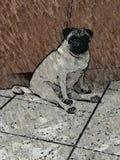 PugLife 免版税库存图片