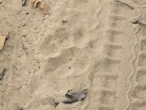 Pugmark d'un tigre de feamle image stock
