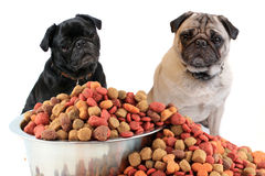 Pugs and dog food Stock Images