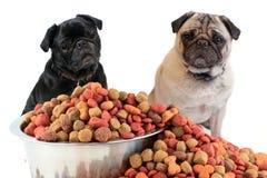 Pugs e alimento de cão Imagens de Stock