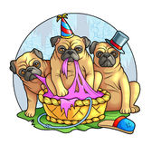 Pugs. Funny cute pugs have fun Royalty Free Stock Photo