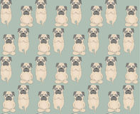 Pugs meditation yoga pattern. Cute dogs. Stock Photography
