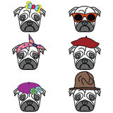 Pugs set of icon Stock Photo