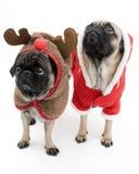 Pugs van Kerstmis Stock Fotografie