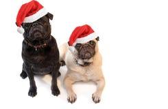 Pugs van Kerstmis Royalty-vrije Stock Afbeeldingen