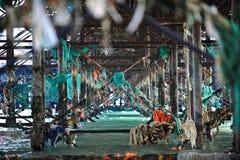 Puin van oceaan onder pijler Royalty-vrije Stock Afbeelding