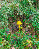 Puissance de feu de bouche d'incendie Photographie stock libre de droits
