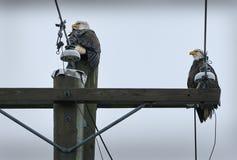 Puissance Polonais d'Eagles Image stock