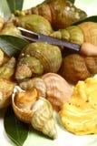 Puisten of overzeese slakken, zeevruchten Stock Foto's