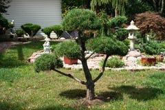 Puits entretenu l'arbre photo libre de droits