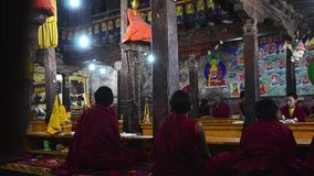 Daily puja with  young buddhist monks stock video footage