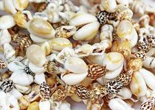 Puka Shells Stock Photos