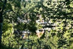 Pukekura parkerar sjön arkivbild