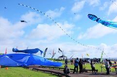Puketapapa Manu Aute Kite Day Stock Photography