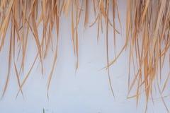 Pula su fondo bianco Fotografie Stock Libere da Diritti