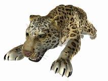 Pulando o jaguar fotografia de stock royalty free