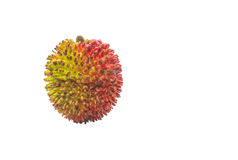Pulasan Fruit or Nephelium mutabile Royalty Free Stock Image